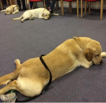 Hinton-puppy class 9mths